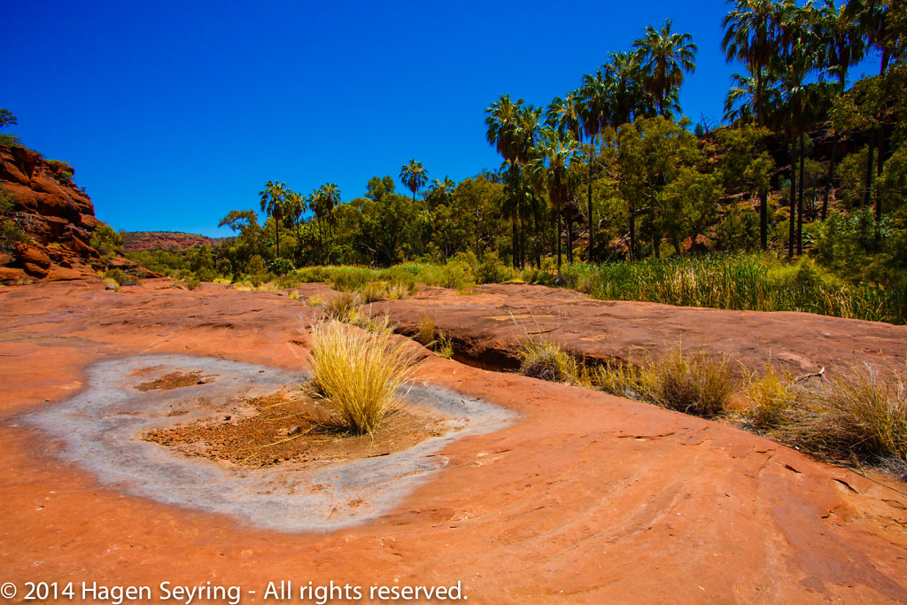 On the ground of thePalm Valley