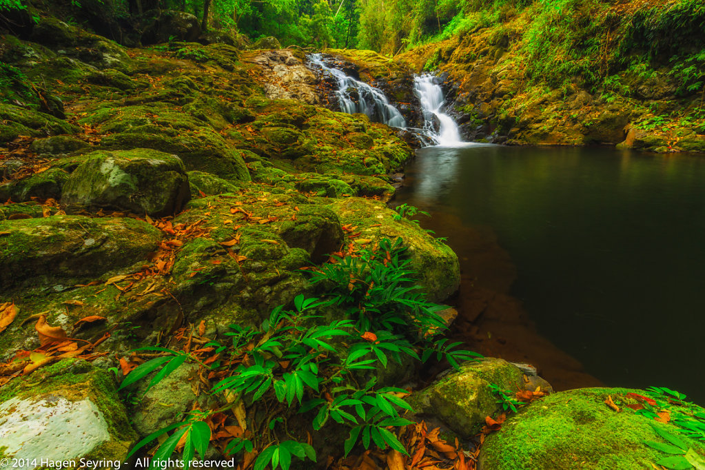 Waterfall along the Box Forrest Walk in the Lamington National P
