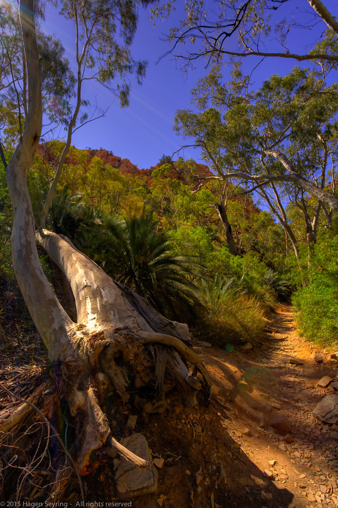 Trail to Standley Chasm