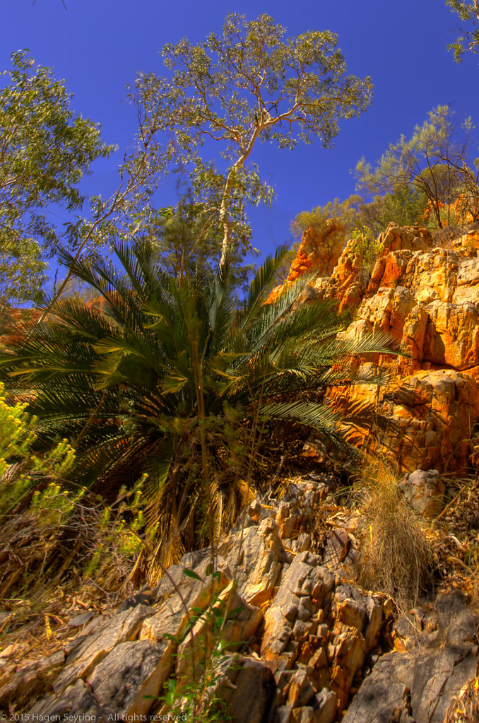 Palm in the Standleay Chasm